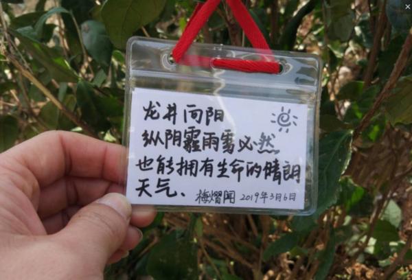 18种树.png